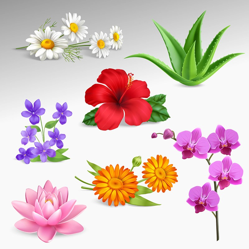 دانلود وکتور گل های مختلف